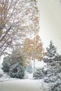 [UGCDC-CJ-weather]frederick snow