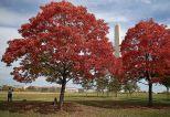 Washington Monument on the National Mall