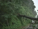 Tree Down on East-West Highway