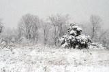 Pre-Thanksgiving Snow Falls in D.C. Area