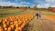 Md./Va. Pumpkin Patches
