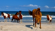 Assateague and Chincoteague islands