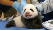 pandacam1