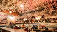 Cherry Blossom Pop-Up Bar Returns (Through April 29)