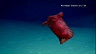 'Headless Chicken Monster' Spotted Off Antarctica