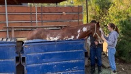 Odd Rescue: Horse Trapped in Dumpster Hoisted to Safety