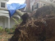 [UGCDC-CJ]Clean up continues. Alexandria and it's old historic trees got hit hard @TishaOnTV has more at 5pm/6