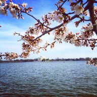 [UGCDC-CJ]The cherry blossoms are here! @capitalweather @nbcwashington @wtop https://t.co/sbVT80C645