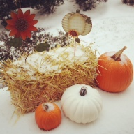 [UGCDC-CJ-weather][EXTERNAL] Snow on my pumpkins pic