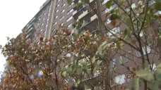 Child Survives Fall From 9th-Floor Window in Montgomery Co.