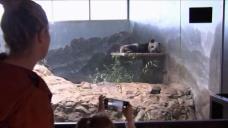 National Zoo Saying Bye Bye to Bei Bei