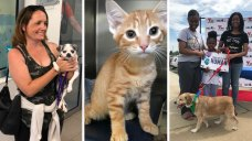 Clear the Shelters: 1,000+ Local Pets Find Forever Homes