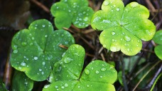 Cool Temperatures, Rain Expected for St. Patrick's Day