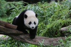 Saying Bye to Bao Bao: Your Zoo Visit Survival Guide