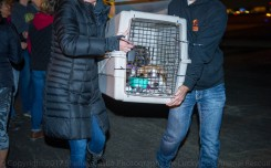 100 Dogs Rescued From Puerto Rico, Flown to Dulles
