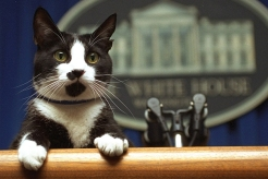 Presidential Pets Through the Years: Honoring White House Companions