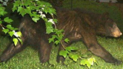 Bear Sighting in Va. Prompts Reminder to Keep Distance