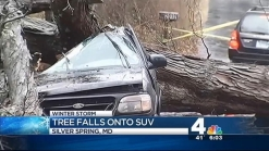 Tree Falls on SUV in Silver Spring