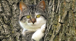 Loitering Cat Finally Identified by Authorities