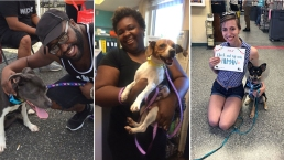 Scenes From #CleartheShelters Day
