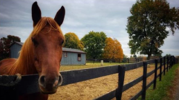 Virginia Rescue Group Hopes Horses Can Find New Home