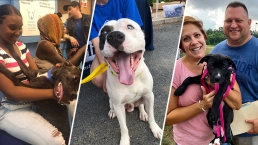 Photos: Dozens of DC-Area Shelters Waive Adoption Fees