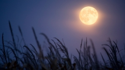 Rare Harvest 'Micromoon' on Friday the 13th