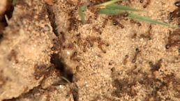 Fire Ants Kill Alabama Woman