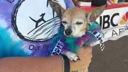 Pets Find New Homes Thanks to Clear the Shelters