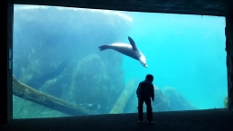 WATCH: Sea Lion Flips for Boy at National Zoo