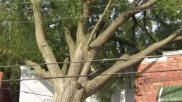 Tree Falls on SE DC Home