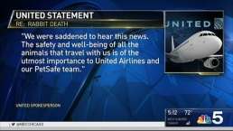 Death of Giant British Rabbit Adds to United Airlines' Woes