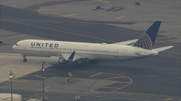 United Flight From Italy Lands at Newark After Travelers Describe Ant Nightmare