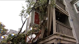 Tree Falls Through Md. Apartment During Storm