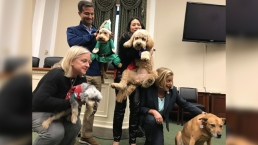 Capitol Hill's Office Dogs Host Bi-paw-tisan Holiday Bash