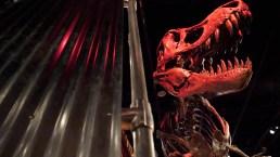 Are Museum Bones Real?