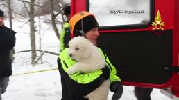 Puppies Rescued From Italy Avalanche