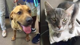 Clear the Shelters: 1,000+ Local Pets Find Homes