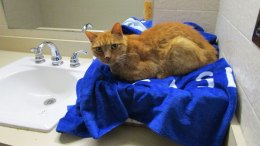 Virginia Family's Cat Rescued at Michigan Welcome Center