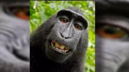 US Appeals Court Rejects Copyright Suit Over Monkey Selfies