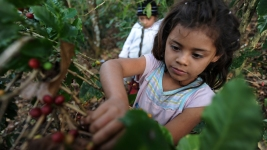 Loophole Lets Goods Made by Forced Labor Into U.S.