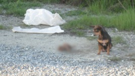 $6K Reward to Find Who Threw Out Dogs in Sand Bags