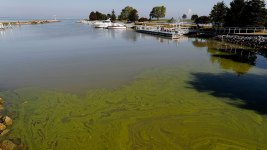 Understanding Farm Runoff and the Worsening Algae Plague