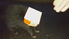 NJ Officer Saves Skunk Trapped in Orange Juice Carton