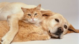 8 Things to Do If You Find a Stray Cat or Dog