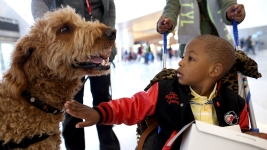 Support Roles for Dogs Go Beyond Helping the Blind