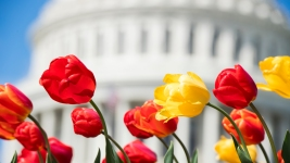 DC Heads to 100% Renewable Energy, a Symbolic Move for the Country