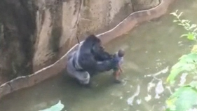 Zoo Where Gorilla Was Killed Had Problems in Past: Feds