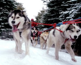 Dog-Sledding: Yes, You Can