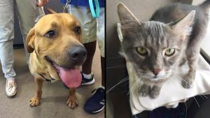 Clear the Shelters: 1,400+ Local Pets Find Homes